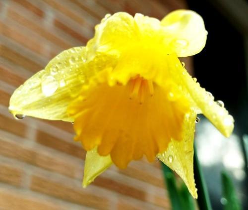 flores y