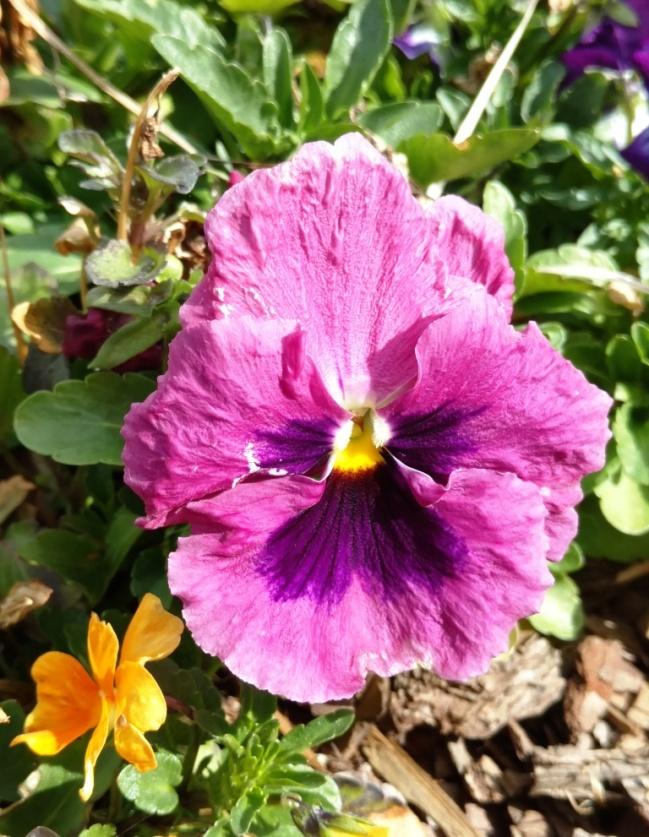 flores1-