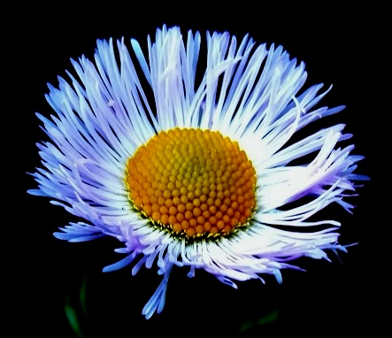 flores rectory-