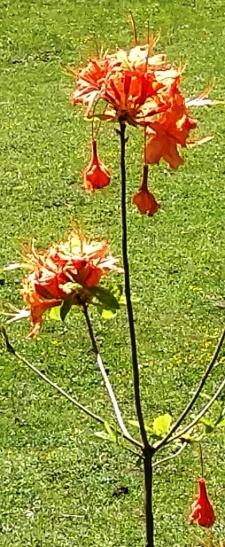 flores orange 2