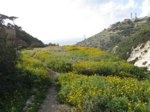 flores - mount carmel wadi