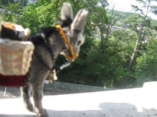 lourdes donkey carmelite monastery