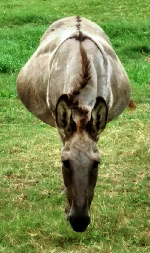 donkey floating