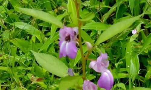 flores india 2