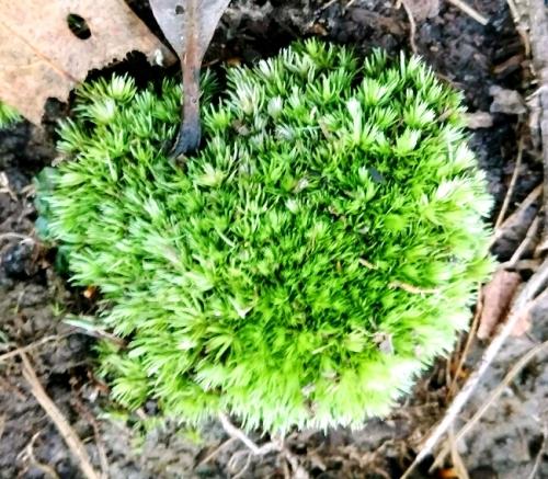 flores-moss