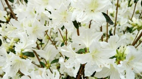 flores bright