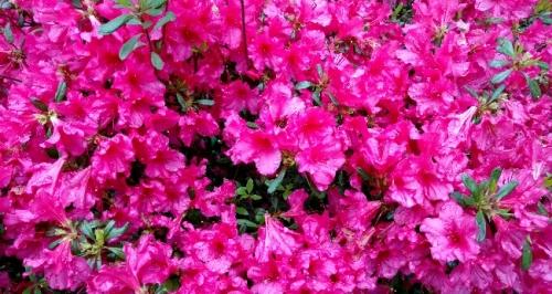 flores j