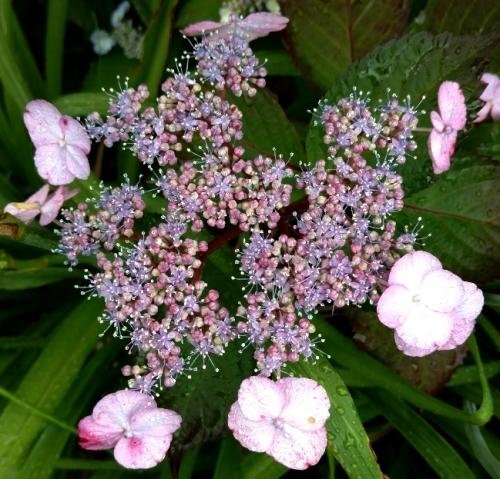 flores buds