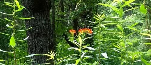 flores orange 3