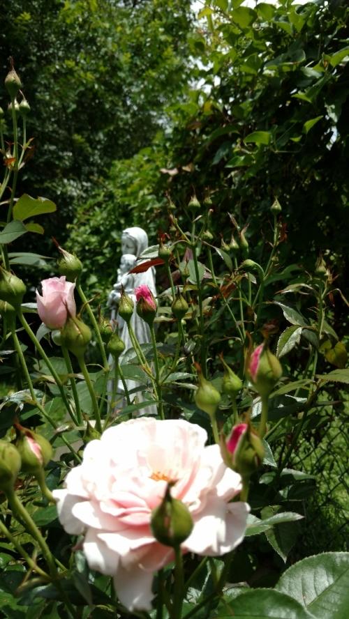 flores rosebuds