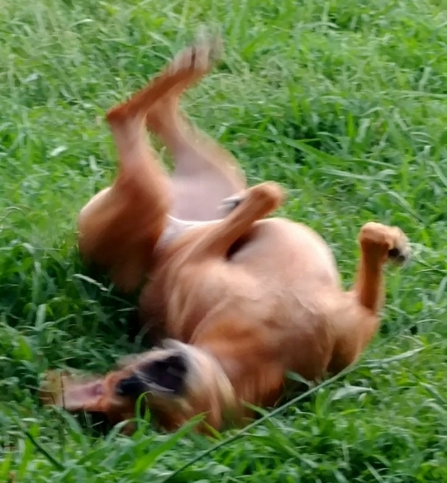 laudie dog break dance