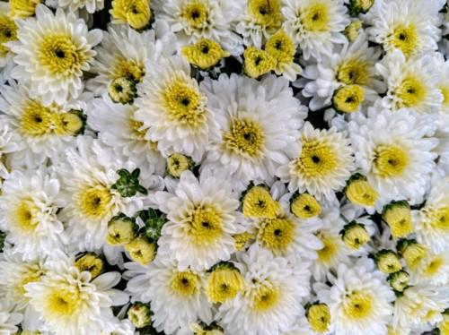 flores white yellow
