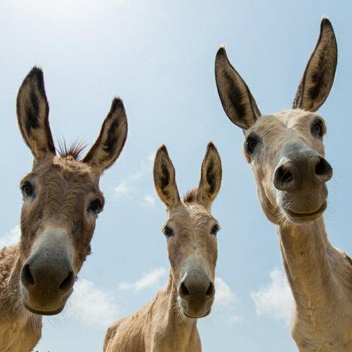 donkeys1330672975.jpg