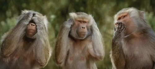 hear see speak no evil monkeys