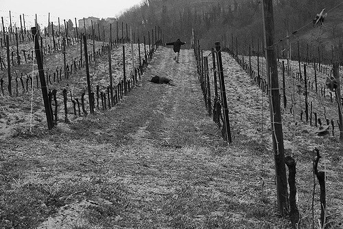 parable of murder in the vineyard
